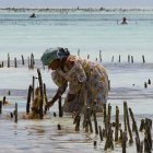 Seaweed farmer