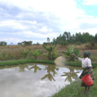Feeding fish at a smallholding, Malawi