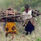 Women collecting wood in eastern Kenya