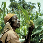 Sorghum farmer in Burkina Faso