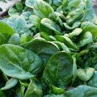 Folic acid is found in leafy greens like spinach