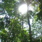 looking up at a rainforest canopy, from below, Venezuala