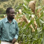 Zimbabwean crop researcher